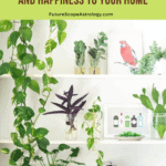 Feng Shui - Plants that bring  Money, Health and Happiness to your Home