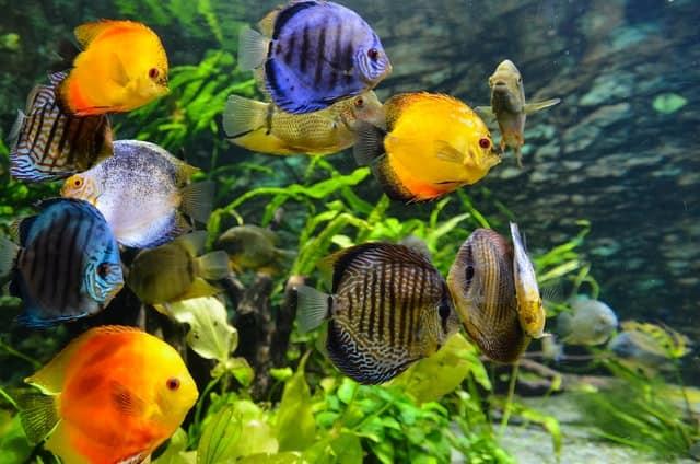 Feng Shui Aquariums: benefits, placement, taking care